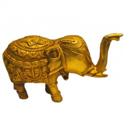 Elephant Lifting Trunk